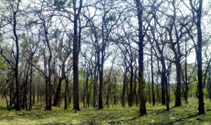 The Mudumalai Forest