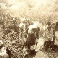 Funeral ceremony-8 Kalhatti