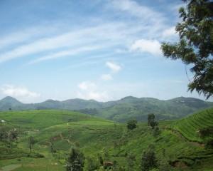 cropped-landscape-b.jpg