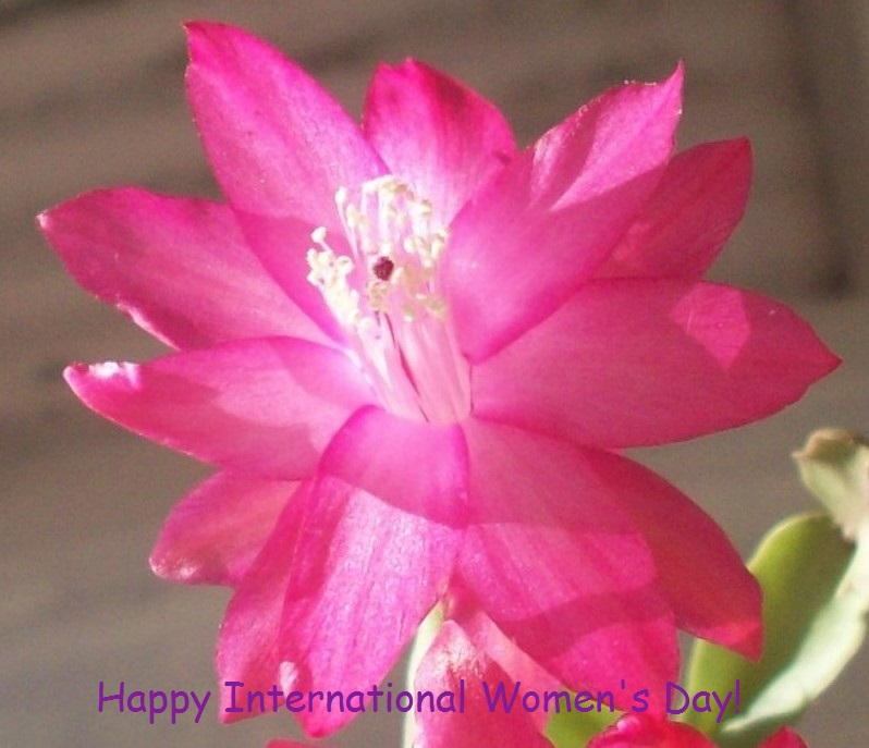 International Women's day - India's Daughters!